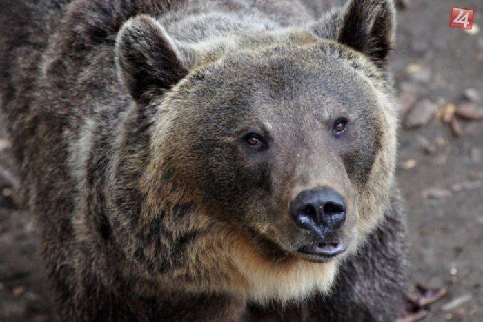 Ilustračný obrázok k článku TOMUTO neuveríte: Pozrite, ako počítajú medvede! :)